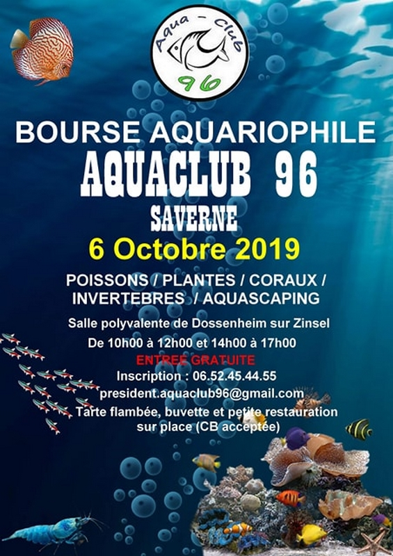affiche bourse saverne octobre 19